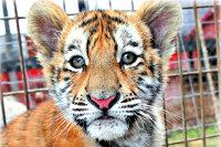 Argomento: Circhi e zoo