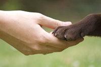 Argomento: Conoscere gli animali