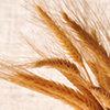 I cereali dai primi piatti al dolce