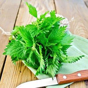 corso vegan: cucina con le erbe spontanee roma [agireora edizioni] - Erbe Spontanee In Cucina